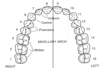 upper-arch